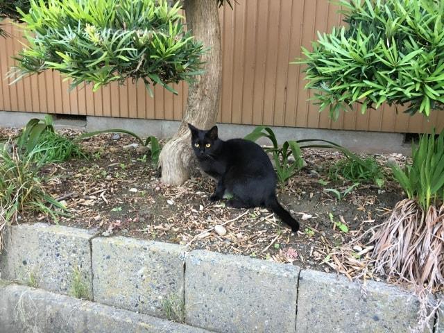 野良猫の黒猫のイメージ写真