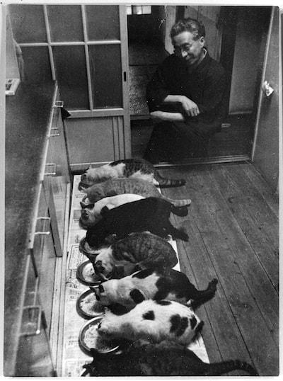 大佛次郎と一列に並んでご飯を食べる猫 (1954年撮影:石井彰氏)