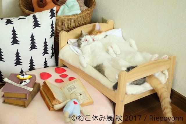 Riepoyonnの作品、仲良くベッドで寝る双子猫「アメリ」と「カヌレ」