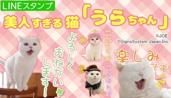 美人すぎる白猫「うらちゃん」のLINEスタンプ