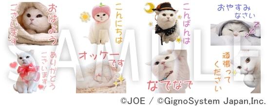 美人すぎる白猫「うらちゃん」のLINEスタンプ(サンプル)