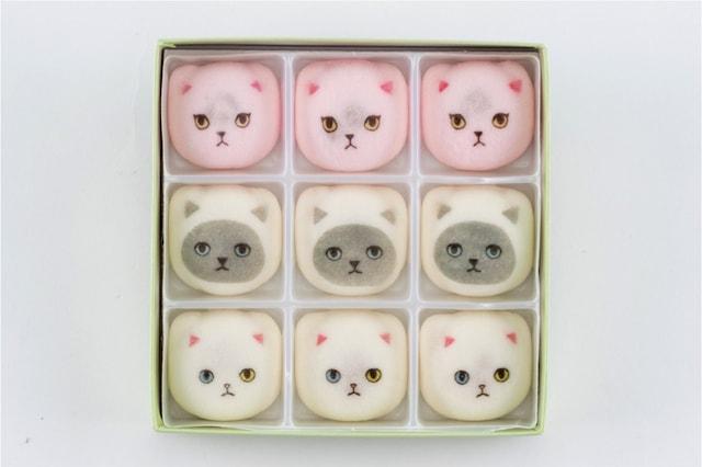 白猫、ヒマラヤン、オッドアイ、3種類の猫の鳳瑞(ほうずい)