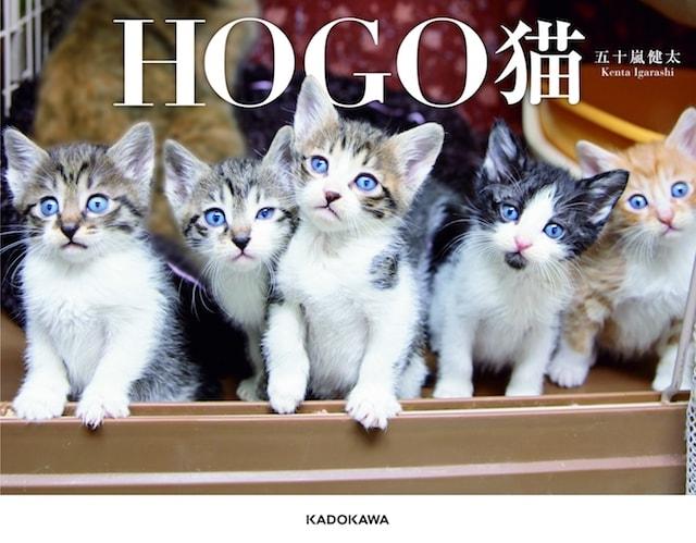 カメラマン・五十嵐健太さんの猫写真集「HOGO猫」