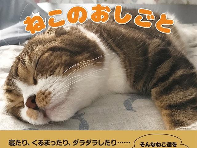 実は何かと忙しい?猫の仕事ぶりに密着した写真集「ねこのおしごと」