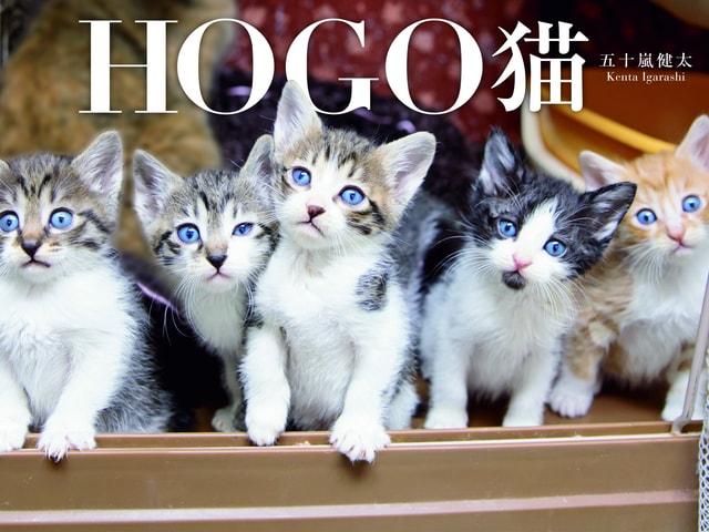 写真家・五十嵐健太さんの新作写真集「HOGO猫」が発売、写真展も開催