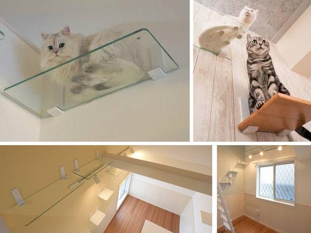 家で愛猫の肉球が見放題、DIYで設置できる透明キャットウォーク&キャットステップ