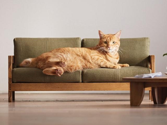 大川の家具職人が本気で作った猫用のハイクオリティ家具「ネコ家具」
