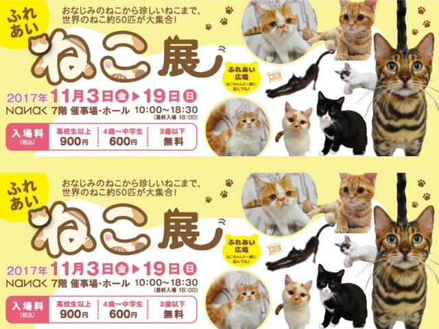 世界中の珍しい猫と触れ合える「ふれあいねこ展」岩手県盛岡市で開催