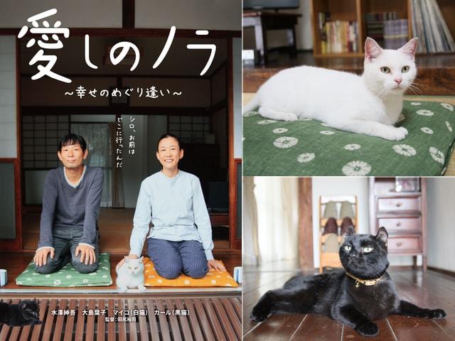 猫と人間が織りなす感動の物語、映画「愛しのノラ~幸せのめぐり逢い」