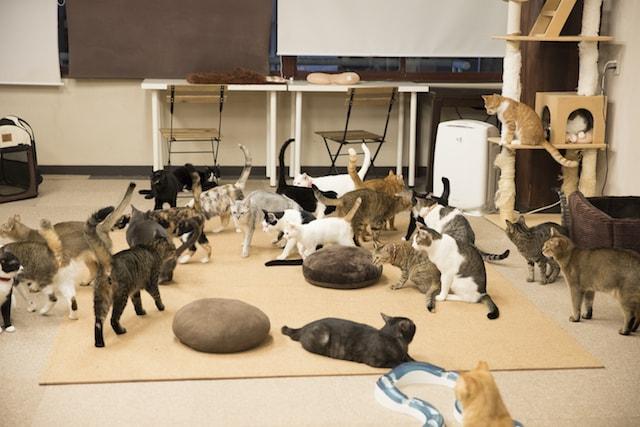 五十嵐健太・猫写真集「HOGO猫」の収録写真イメージ