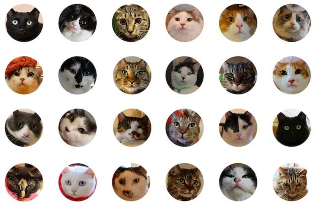 総勢50匹の猫をドュメンタリー映像と写真で紹介