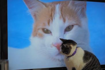 岩合さんのネコ歩き【2015年5月の番組表】