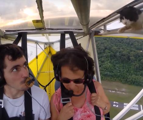 飛行機の翼に乗って空を飛ぶ猫がいた【動画】