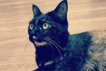 座りながら気になるものを見つけた猫の写真