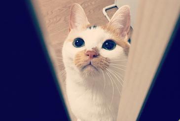 瞳孔をまんまるに開いて下から見上げる猫の写真