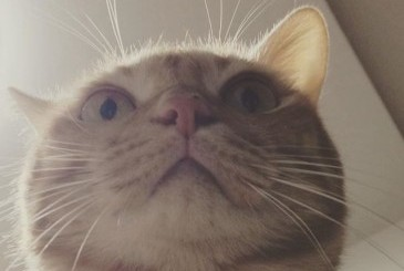 下から見上げたビックリ顔の猫の写真