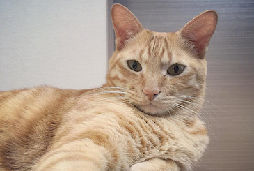 偉そうな表情を浮かべてたたずむ猫の写真