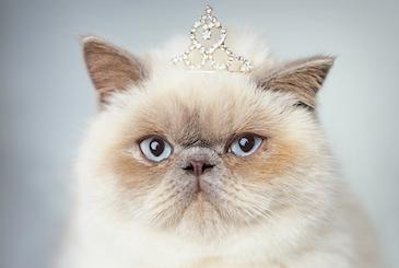 世界の美しい猫を101匹も集めた写真集が発売されたらしい