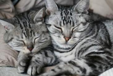 猫の日のプレイベント!2016年の2月20〜21日に「ちよだ猫まつり」が開催されるぞ!
