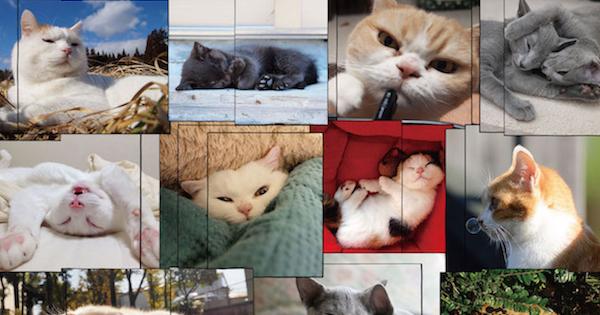 猫の写真展