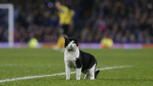 サッカーの試合中に登場した猫