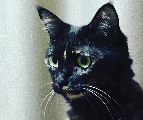シリアスな表情を浮かべるサビ猫の写真