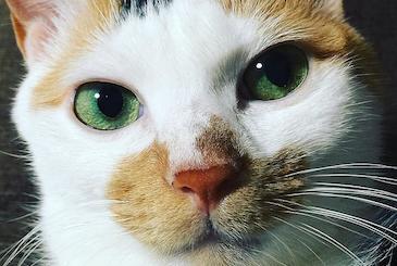 三毛猫のどアップ写真