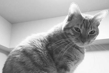 一瞥をくれる猫