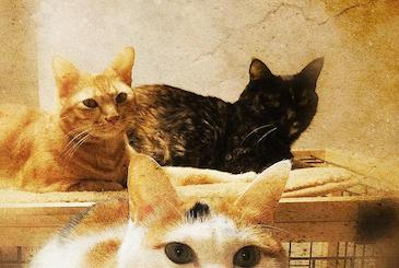 3匹の猫の写真