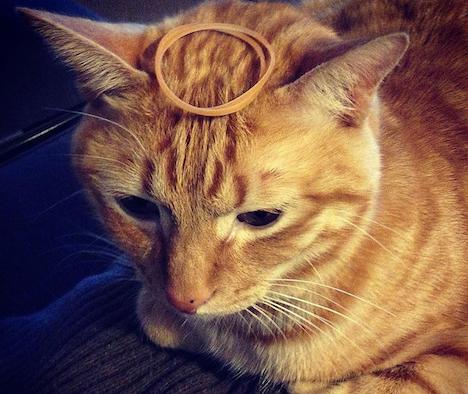 猫のおもしろ写真