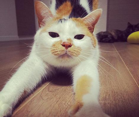 猫伸びストレッチをする猫の写真