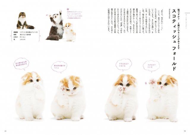約40種の猫が登場!可愛い写真を厳選した「ときめく猫図鑑」が発売