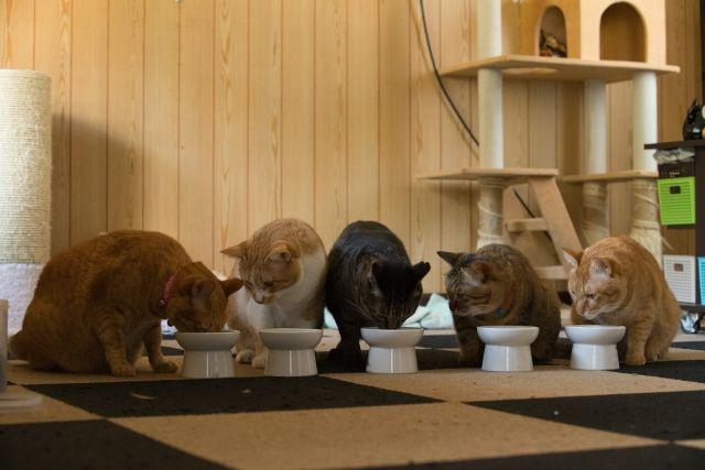 ミックス猫 雑種猫