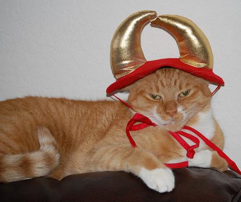 猫の節分コスプレ写真です