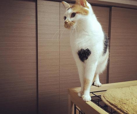 キャットケージの上に立つ三毛猫の写真