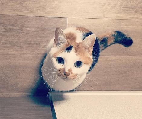 獲物をロックオンした猫を真上から撮影した写真