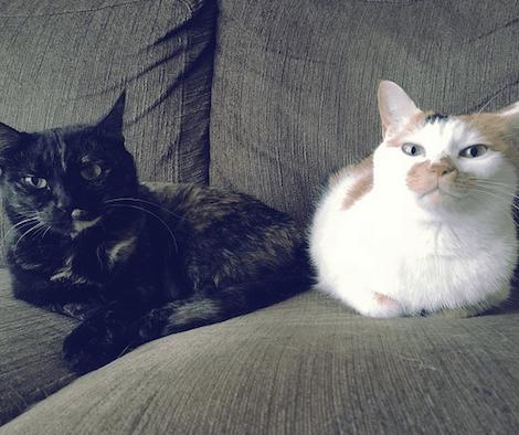 黒っぽい猫と白っぽい猫のコンビ写真