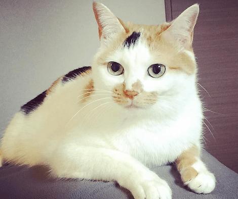 人の背中の上でくつろぐ三毛猫の写真