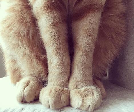 モフモフした猫の身体にフォーカスした写真