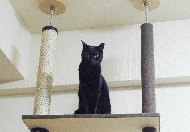 もうすぐ内覧会!横浜に猫歓迎の賃貸アパートが新築オープン