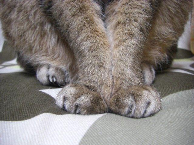 その他の猫