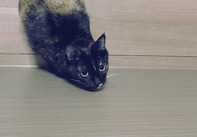 今にもジャンプしそうな猫の写真