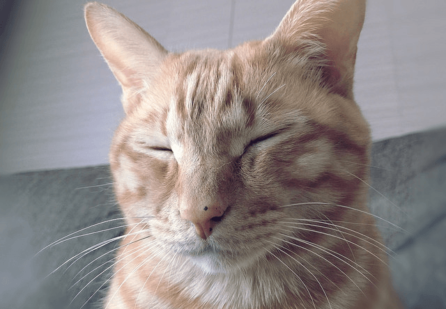 気持ちよさそうに眠る茶トラ猫の写真