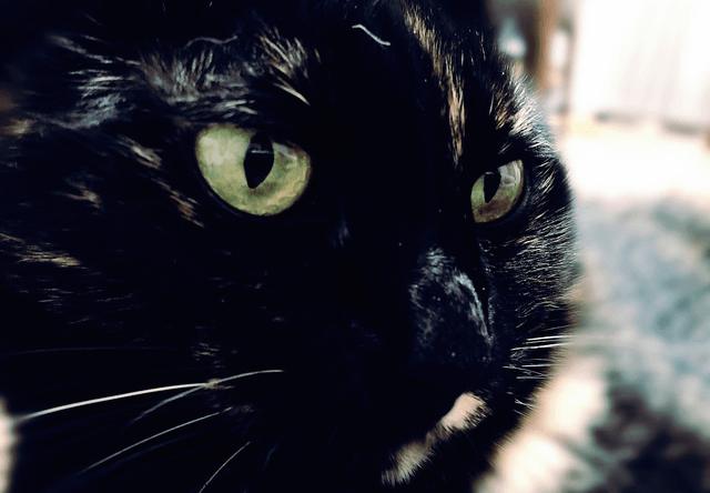 キリッとした表情をするサビ猫の写真