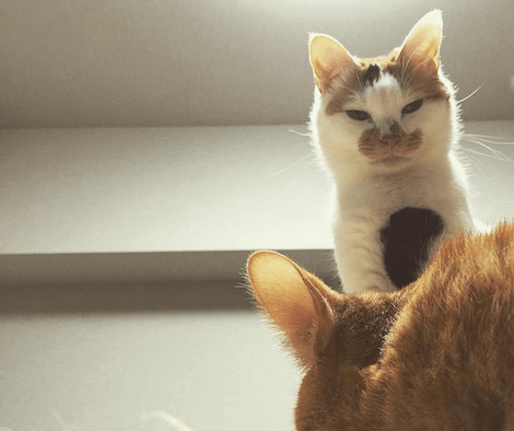 仲間を狙う悪い顔をした三毛猫の写真