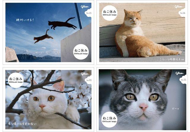 グリコのコロンを買うと岩合さんの猫写真シールがついてくるにゃ