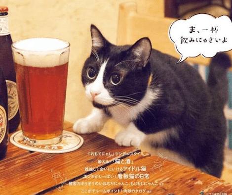 「猫と酒」酒場にいる猫を集めた写真集が発売されたにゃ〜!