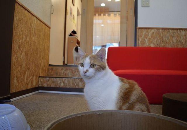 にゃんだらけ – 大阪 樟葉の猫カフェ