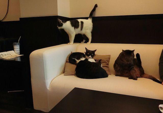 猫cafe calm(カーム) – 大阪 豊中/岡町の猫カフェ
