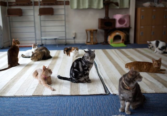 れおん – 横浜 石川町の猫カフェ